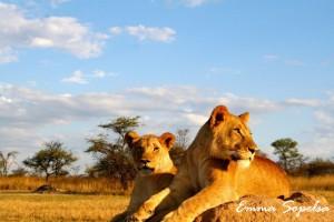 Tema WWF: Lammhult Skola