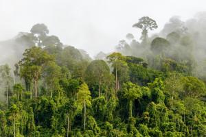Støtt arbeidet til regnskogsfondet