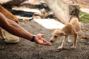 Skydda djuren från utrotning