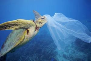 Stötta Plastkampen med Greenpeace Sverige