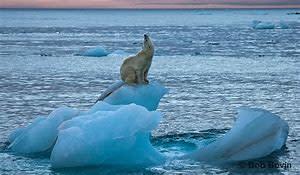 Olivers aksjon for å støtte dyr mot klimaendringar
