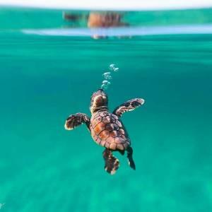 Internationella Skölpaddsdagen