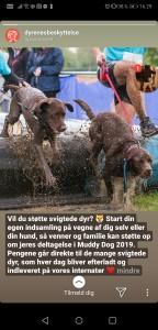 Hjælp dyrene i nød