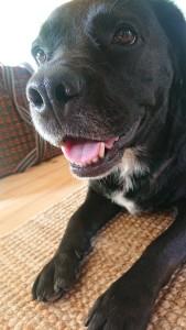 Nala støtter Muddy Dog med muddet
