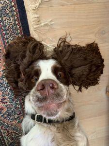 Darwin samler ind til Muddy Dog