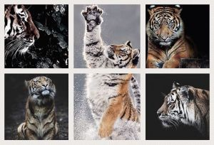 For all the Tiggers of the world !