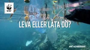 Var med och hjälp oss rädda Östersjön