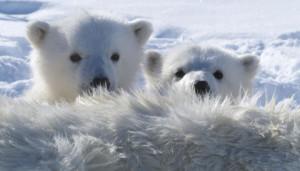 Støtt isbjørnen, ikke klimaendringer!