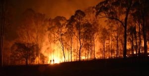 Australian Bushfire Fundraiser