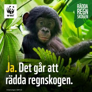Var med och rädda regnskogen