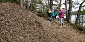 Signe räddar skogen