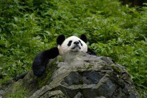 KTG WWF insamling