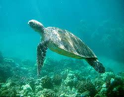 Vill du att våra hav ska dö?