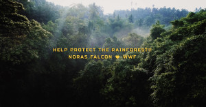 Help protect the rainforest!!  Noras Falcon 💚 WWF!