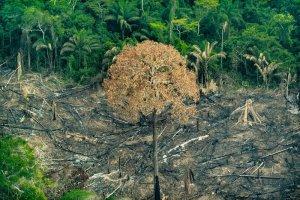 Vi kan rädda regnskogen! Tillsammans!