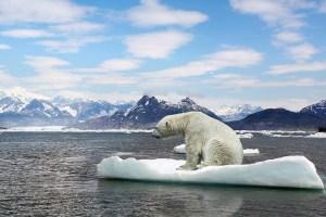 Arktis insamling