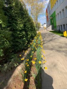 Zamiast kwiatka w SP 168 w Warszawie