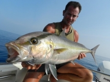 Small1373643688 yellowtail amberjack