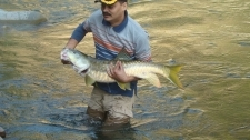 Small1390232555 golden 20mahseer dixit