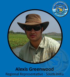 Alexis greenwood   southern representative