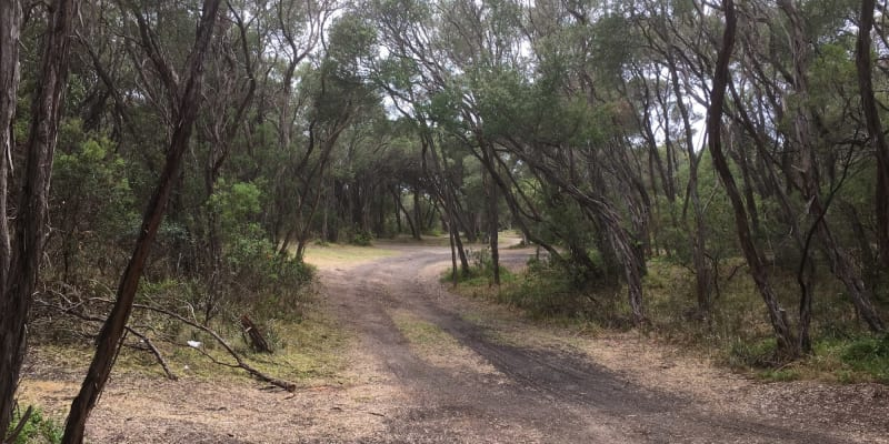 Top 10 National Park campgrounds near Sale, VIC