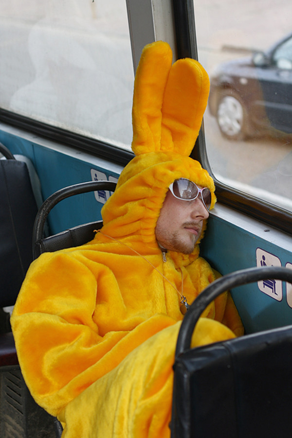 Фото зайцев в автобусе имеют ли право планшета