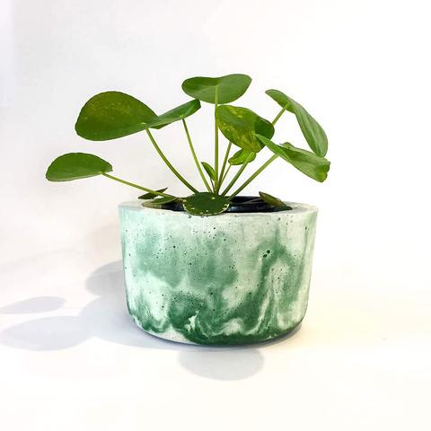 Twig Plants and Pots - The Green Lantern concrete indoor plant pot