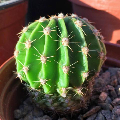 Twig Plants and Pots - Cactus mixed concrete indoor plant pot
