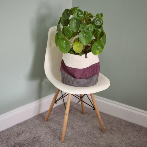 Cotton Pot - Regal