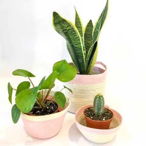 Twig Plants and Pots - Pink Dove concrete indoor plant pot