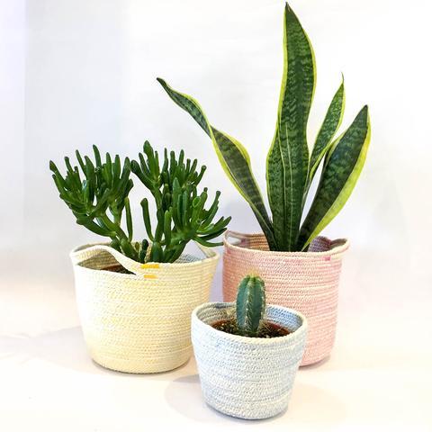Twig Plants and Pots - Sky concrete indoor plant pot