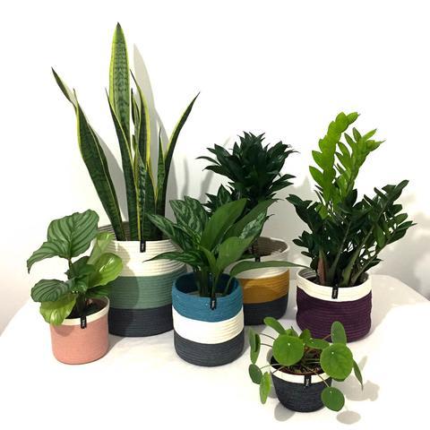 Cotton Pot - Evergreen