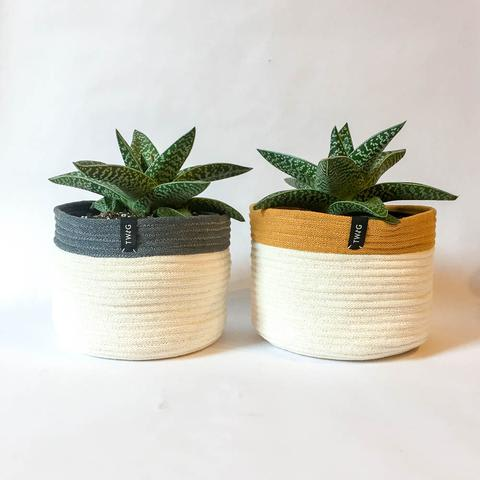 Twig Plants and Pots - Amber concrete indoor plant pot
