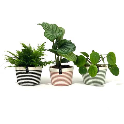 Cotton Pot - Peppermint