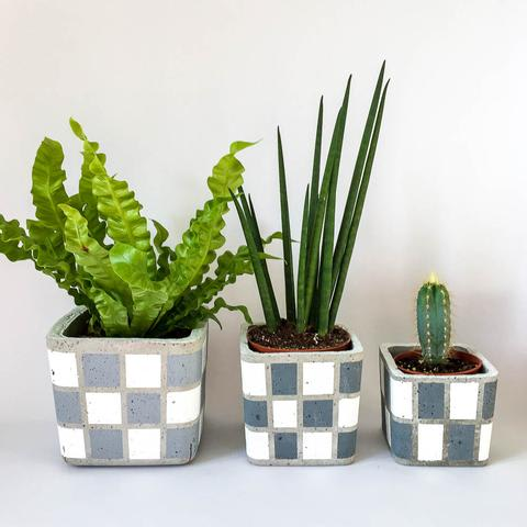 Twig Plants and Pots - Checkerboard concrete indoor plant pot