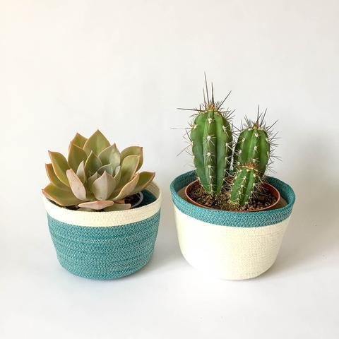 Twig Plants and Pots - Bluebird concrete indoor plant pot
