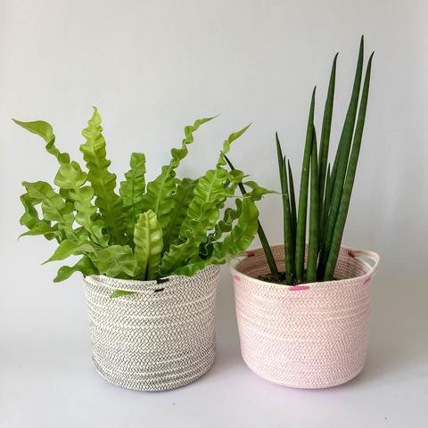 Twig Plants and Pots - Flamingo concrete indoor plant pot