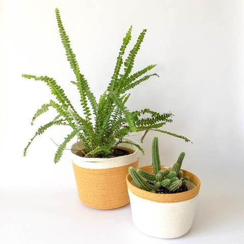 Twig Plants and Pots - Saffron concrete indoor plant pot