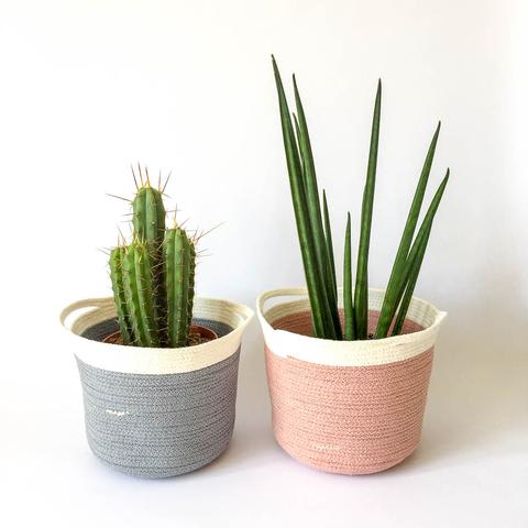 Twig Plants and Pots - Blush concrete indoor plant pot