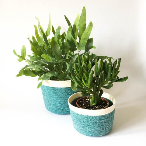 Twig Plants and Pots - Macaw concrete indoor plant pot