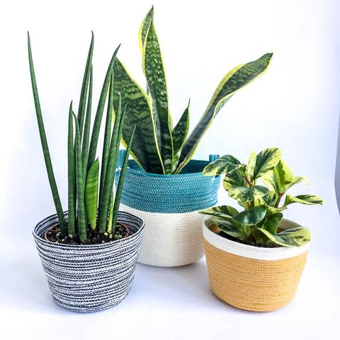 Twig Plants and Pots - Zebra concrete indoor plant pot
