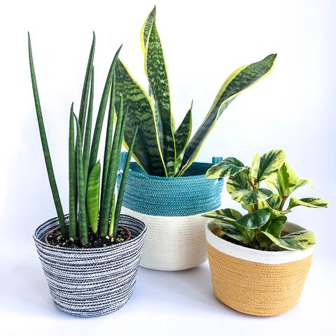 Twig Plants and Pots - Mustard concrete indoor plant pot