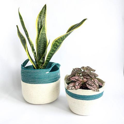 Twig Plants and Pots - Teal Stripe concrete indoor plant pot