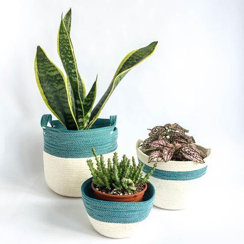 Twig Plants and Pots - Teal concrete indoor plant pot