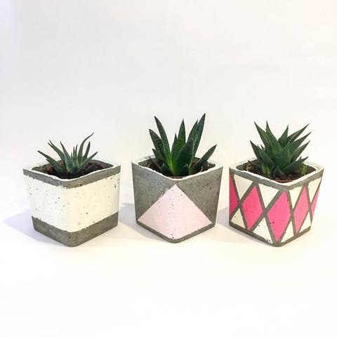 Twig Plants and Pots - Ice cream concrete indoor plant pot