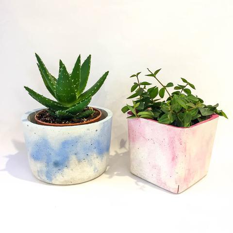 Twig Plants and Pots - Ocean concrete indoor plant pot