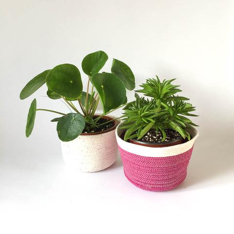Twig Plants and Pots - Plum - limited edition concrete indoor plant pot