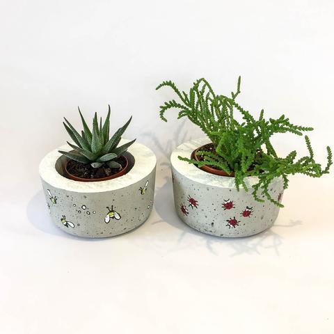 Twig Plants and Pots - Ladybird concrete indoor plant pot