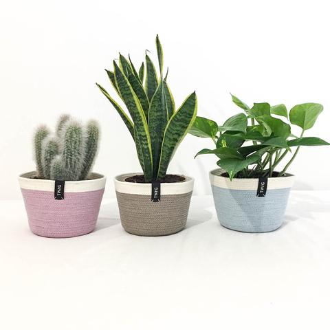 Twig Plants and Pots - Espresso concrete indoor plant pot
