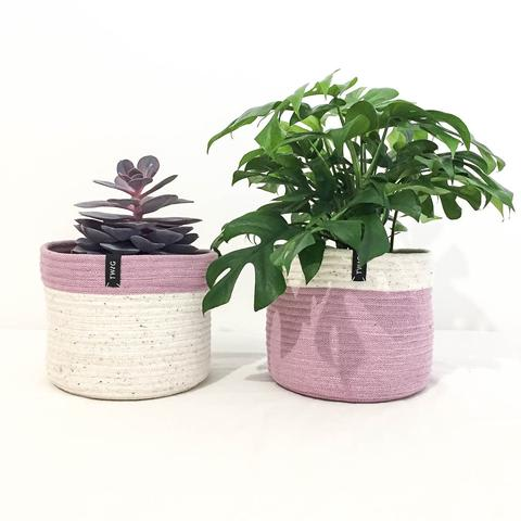 Twig Plants and Pots - Unicorn concrete indoor plant pot